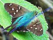 Butterfly Tours